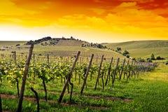 Duitse wijngaard dichtbij de Rijn rivier Royalty-vrije Stock Afbeelding
