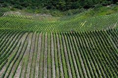 Duitse wijngaard op helling Royalty-vrije Stock Foto's