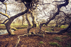 duitsland Hanover Zuidelijk Saksen Dansende bomen Royalty-vrije Stock Foto's