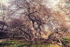 duitsland Hanover Zuidelijk Saksen Dansende boom Royalty-vrije Stock Afbeelding
