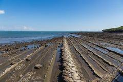 Duivels` s Washboard kustlijn in Aoshima-eiland, Miyazaki royalty-vrije stock foto's
