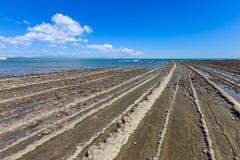 Duivels` s Washboard kustlijn en strand in Aoshima-eiland, Miyazak stock fotografie