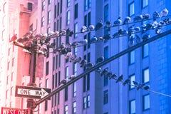 Duiven bij de winter in de Stad van New York Stock Foto