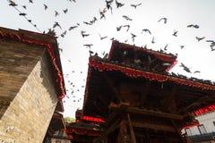 Duiven bij Durbar-Vierkant in Katmandu, Nepal Stock Foto