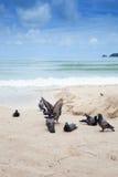 Duiven bij het strand Royalty-vrije Stock Afbeeldingen