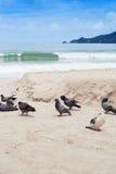 Duiven bij het strand Royalty-vrije Stock Foto