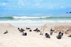 Duiven bij het strand Royalty-vrije Stock Fotografie