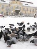 Duiven in de winterstad Stock Afbeelding