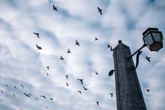 Duiven die tegen de achtergrond van wolken en een oude straatlantaarn vliegen royalty-vrije stock afbeeldingen