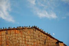 Duiven die zich op een dak bevinden Stock Foto's
