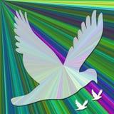 duiven op gradiëntachtergrond Stock Illustratie