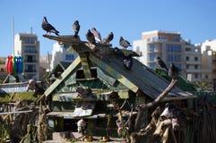 Duiven op het dak van Duck Village, Malta Stock Afbeeldingen