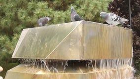 Duiven op waterfontein Royalty-vrije Stock Foto's