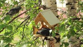 Duiven rond vogelvoeders stock videobeelden