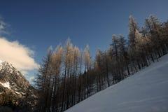 Duizelingwekkende skihelling stock afbeelding