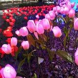 Duizend bloemen royalty-vrije stock fotografie
