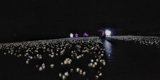 Duizend rozen voor uw weg Stock Foto