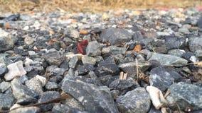 Duizendpoot op steen stock footage