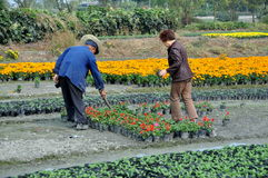 Dujiangyan, China: Flower Nursery Royalty Free Stock Photo