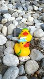 Duk rubber toy. Twin duck on the floor Royalty Free Stock Photo