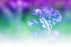 Dulce de la flor Imágenes de archivo libres de regalías