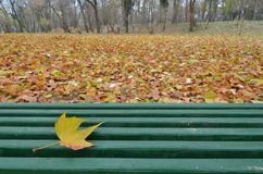 Single yellow leaf of plane tree lying on green wooden bench