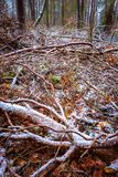 Dull and depressive winter forest landscape. European forest at bad weather in winter Royalty Free Stock Images
