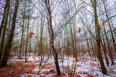 Dull and depressive winter forest landscape. European forest at bad weather in winter Stock Photo