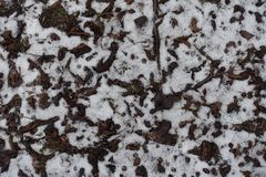 Dull fallen leaves covered with snow. From above Royalty Free Stock Image
