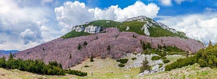 The dull Kamnik–Savinja Alpine magnificence. Slovenia. Royalty Free Stock Images