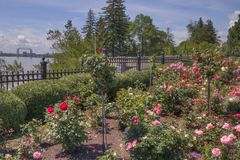 Duluth`s flower garden in summer. Flower Garden Growing during summer in Duluth, Minnesota, United States of America Stock Photo