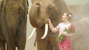 Dulzura de la mujer asiática atractiva joven en traje tradicional con el elefante metrajes