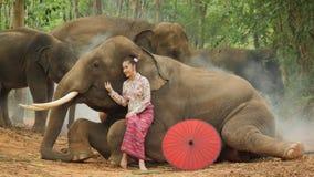 Dulzura de la mujer asiática atractiva joven en traje tradicional con el elefante almacen de video