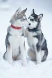 Dulzura del perro Fotos de archivo libres de regalías
