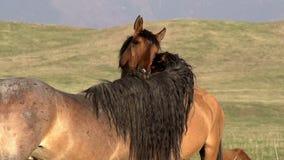 Dulzura HD de los caballos