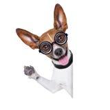 Dum galen hund Arkivbilder