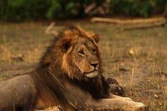 Duma Afryka Zdjęcia Royalty Free