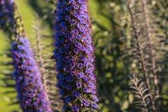 Duma madera kwiaty Fotografia Stock