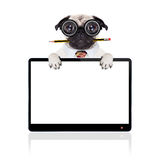 Dumb crazy dog. Dumb crazy pug dog with nerd glasses as an office business worker with pencil in mouth ,behind laptop pc tablet computer screen,  isolated on Stock Photo