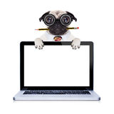 Dumb crazy dog. Dumb crazy pug dog with nerd glasses as an office business worker with pencil in mouth ,behind laptop pc tablet computer screen,  isolated on Stock Photography