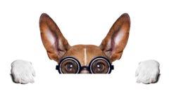 Dumb crazy dog stock image