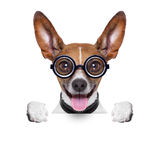 Dumb crazy dog Royalty Free Stock Images