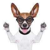 Dumb crazy dog royalty free stock photo