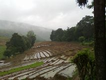 Dumbara斯里兰卡的稻田 免版税库存照片
