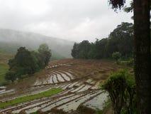 Dumbara Sri Lankan Paddy Fields lizenzfreie stockfotos