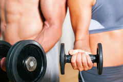 Dumbbell exercise in gym Stock Images