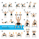 Dumbbell Exercises and Workouts Weight Training. royalty free illustration