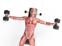 Dumbbell fly Stock Photography