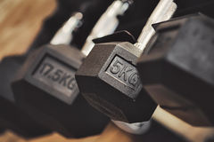 Dumbbell in gym Stock Images