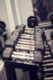 Dumbbell weights in a row in the gym Stock Photography